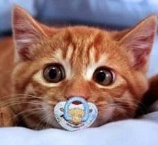 Лицо кота. О другой культуре